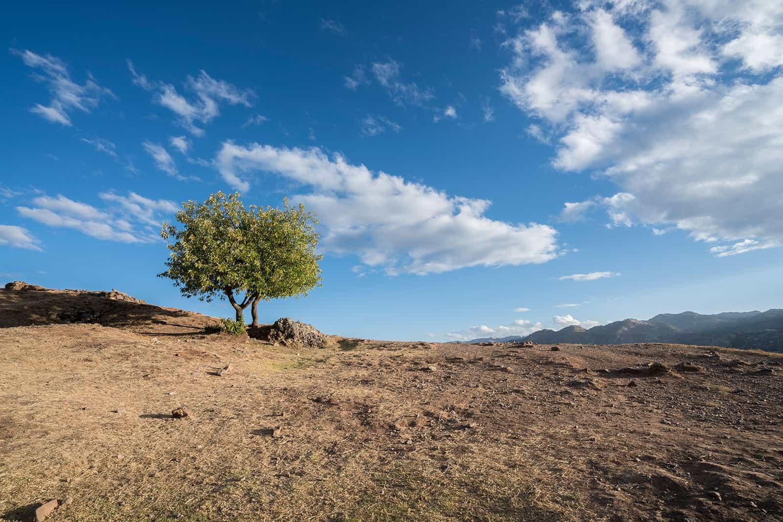 Baum auf Berg