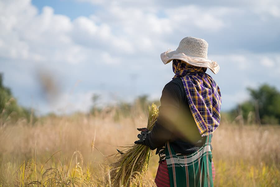 Landarbeiter auf Reisfeld