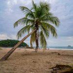 Palme am Carrillo Beach Costa Rica