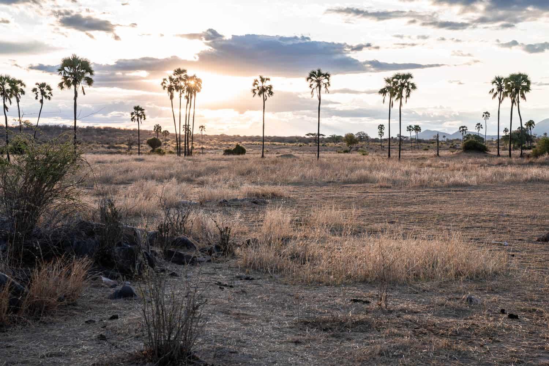 Sonnenuntergangsstimmung in Tanzania