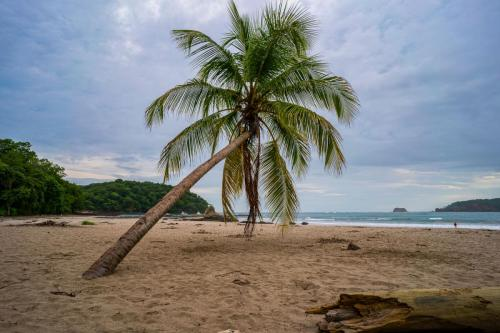 Palme am Carrillo Beach Costa Rica